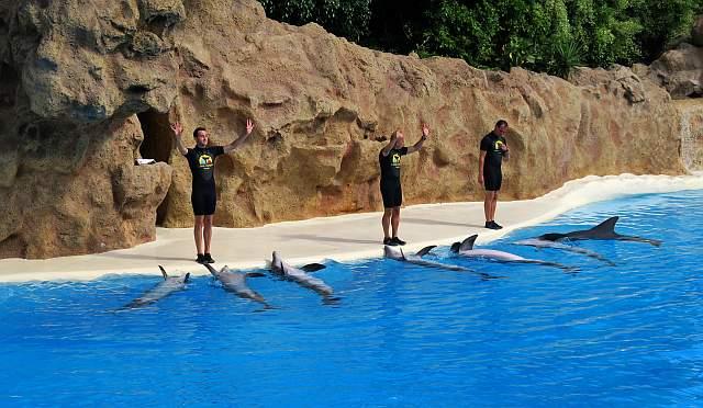 Loro Parque Delfine